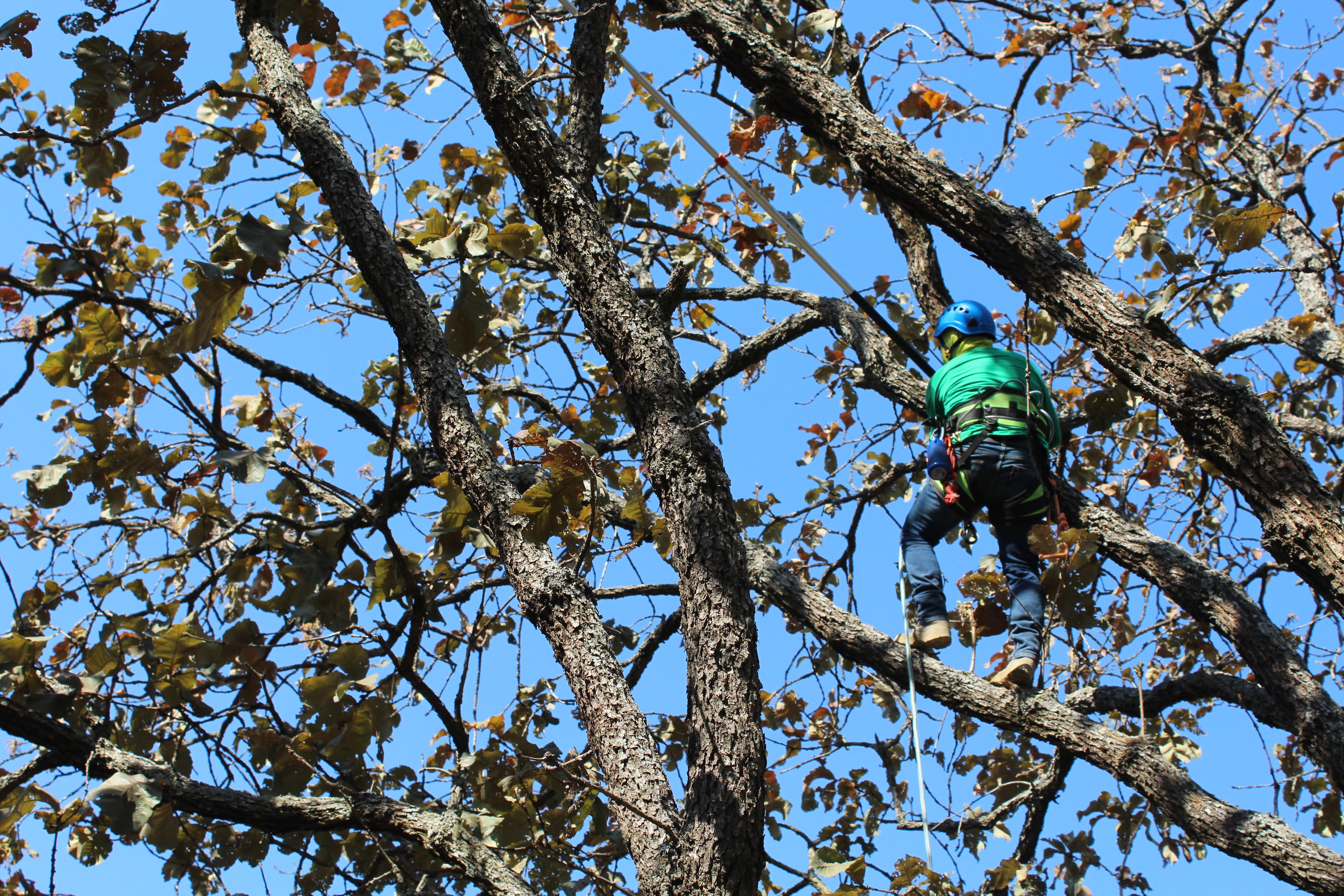 Se realiza saneamiento forestal en el ANP Bosque La Primavera