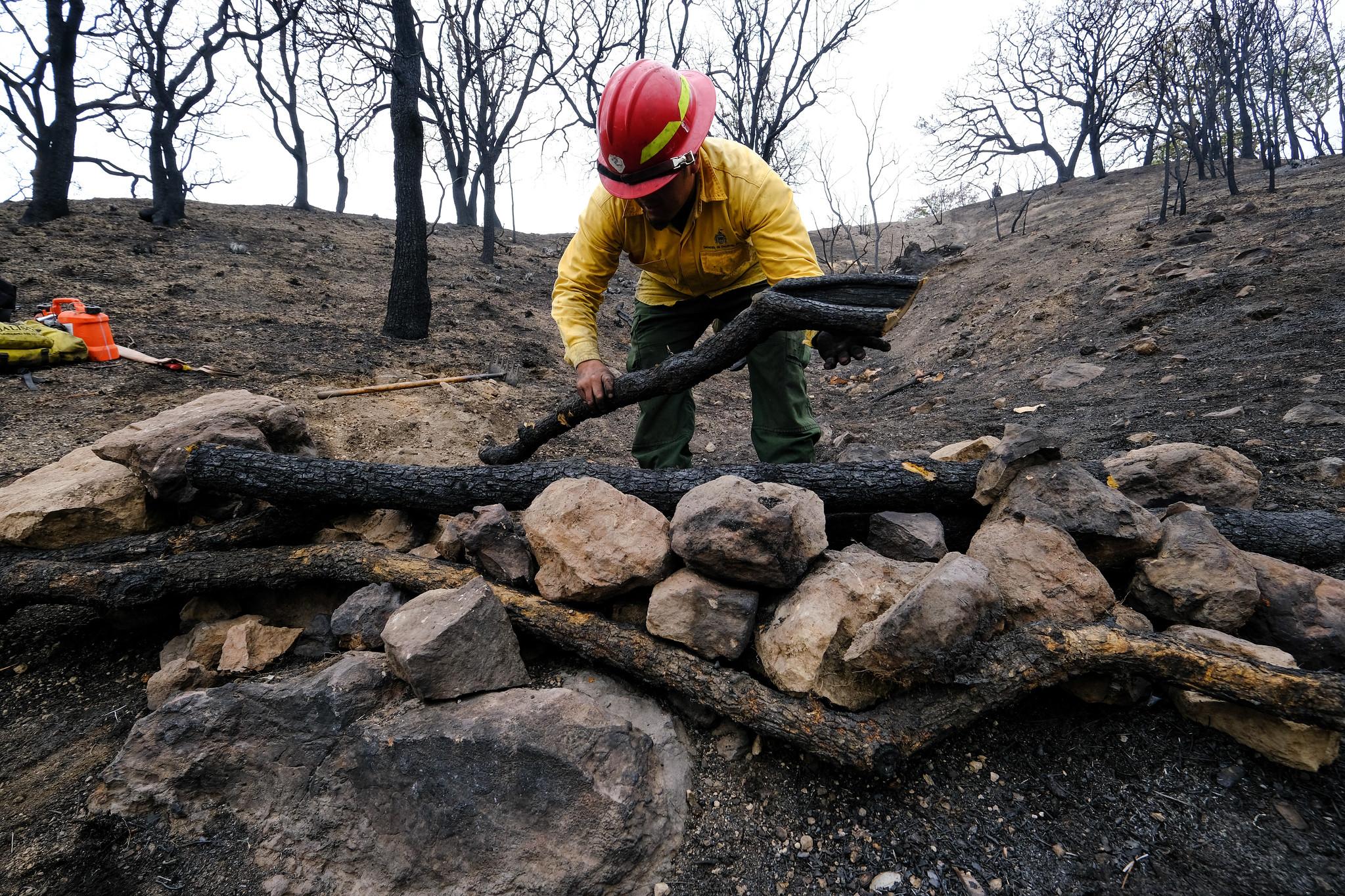 Brigadas Forestales inician con acciones de prevención de deslaves en Bosque La Primavera