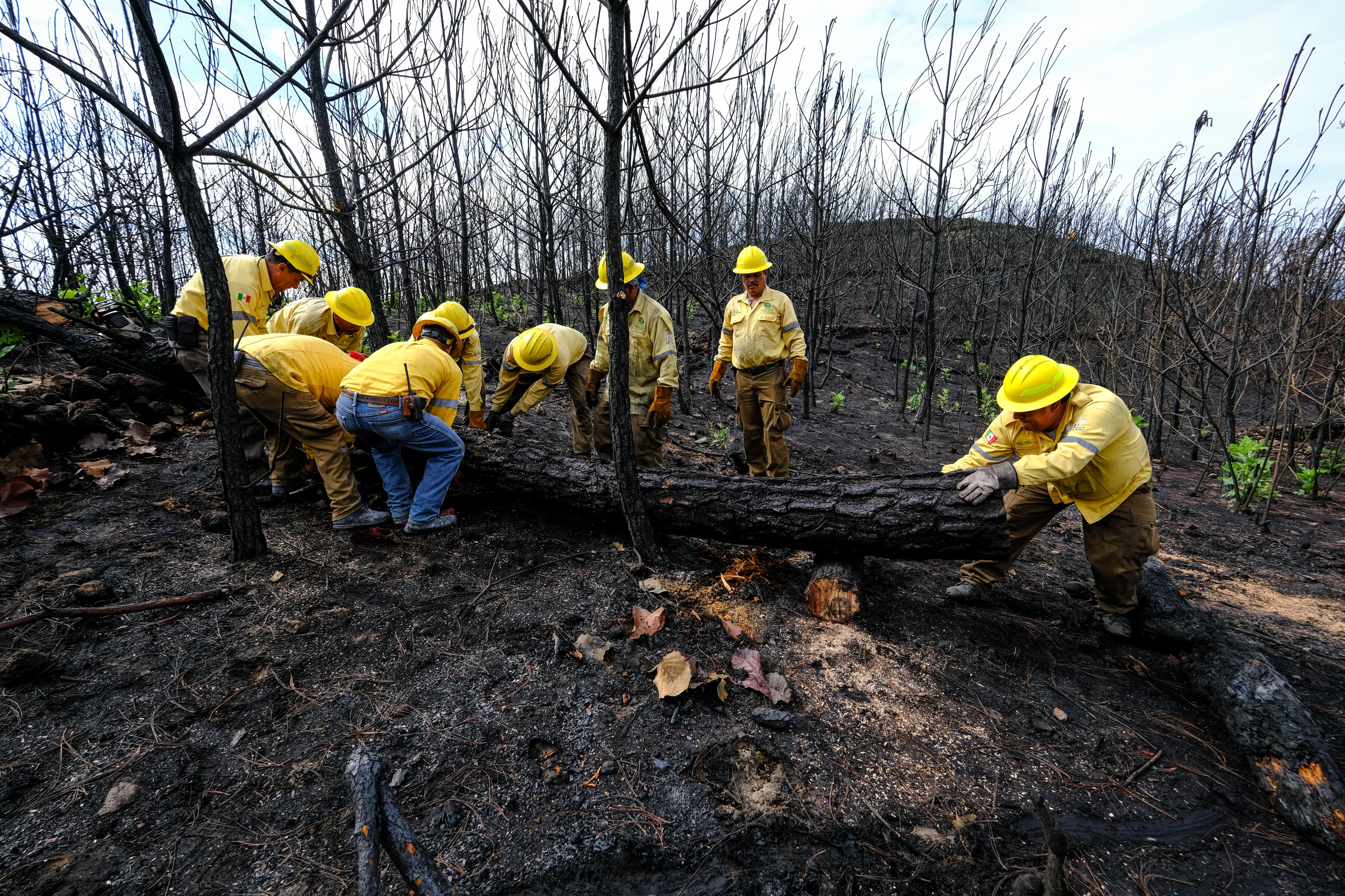 Continúan acciones de prevención de deslaves en Bosque La Primavera