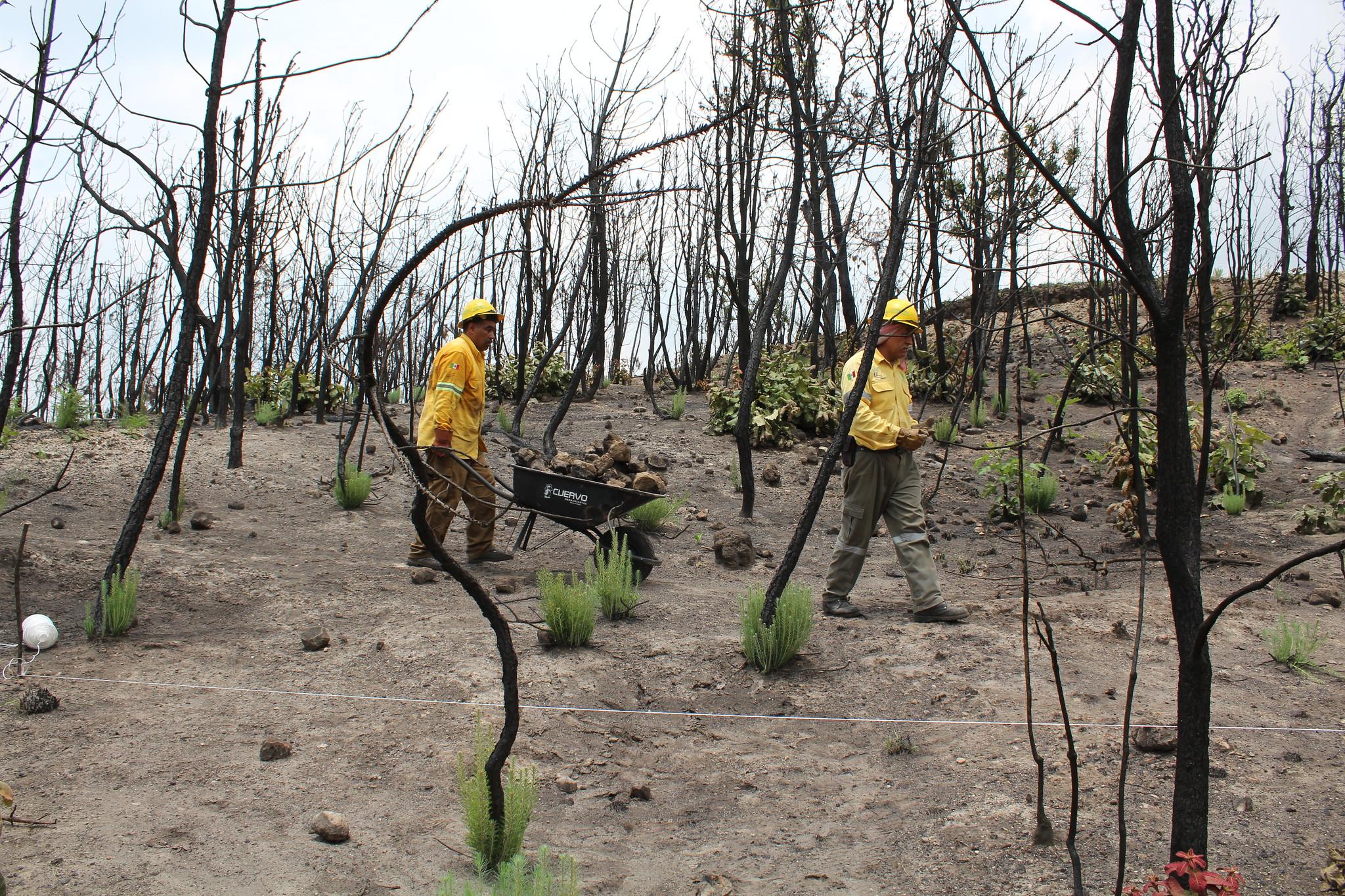 Continúan labores de conservación y restauración de suelos en el Bosque La Primavera