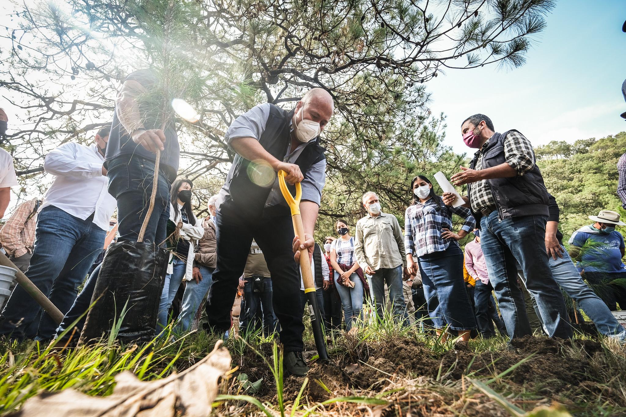 Enrique Alfaro encabeza el inicio de la reforestación en el Bosque de La Primavera