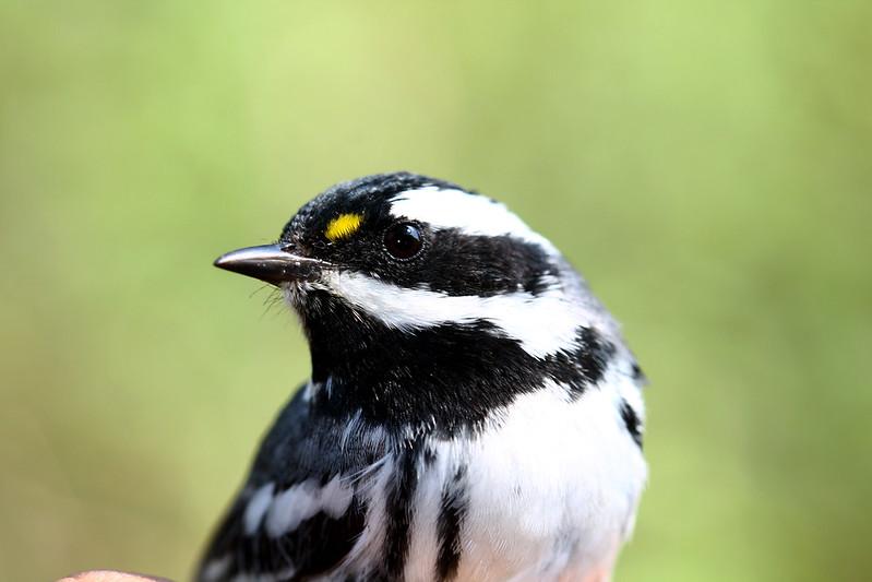 Comenzó la llegada de aves migratorias al Bosque La Primavera