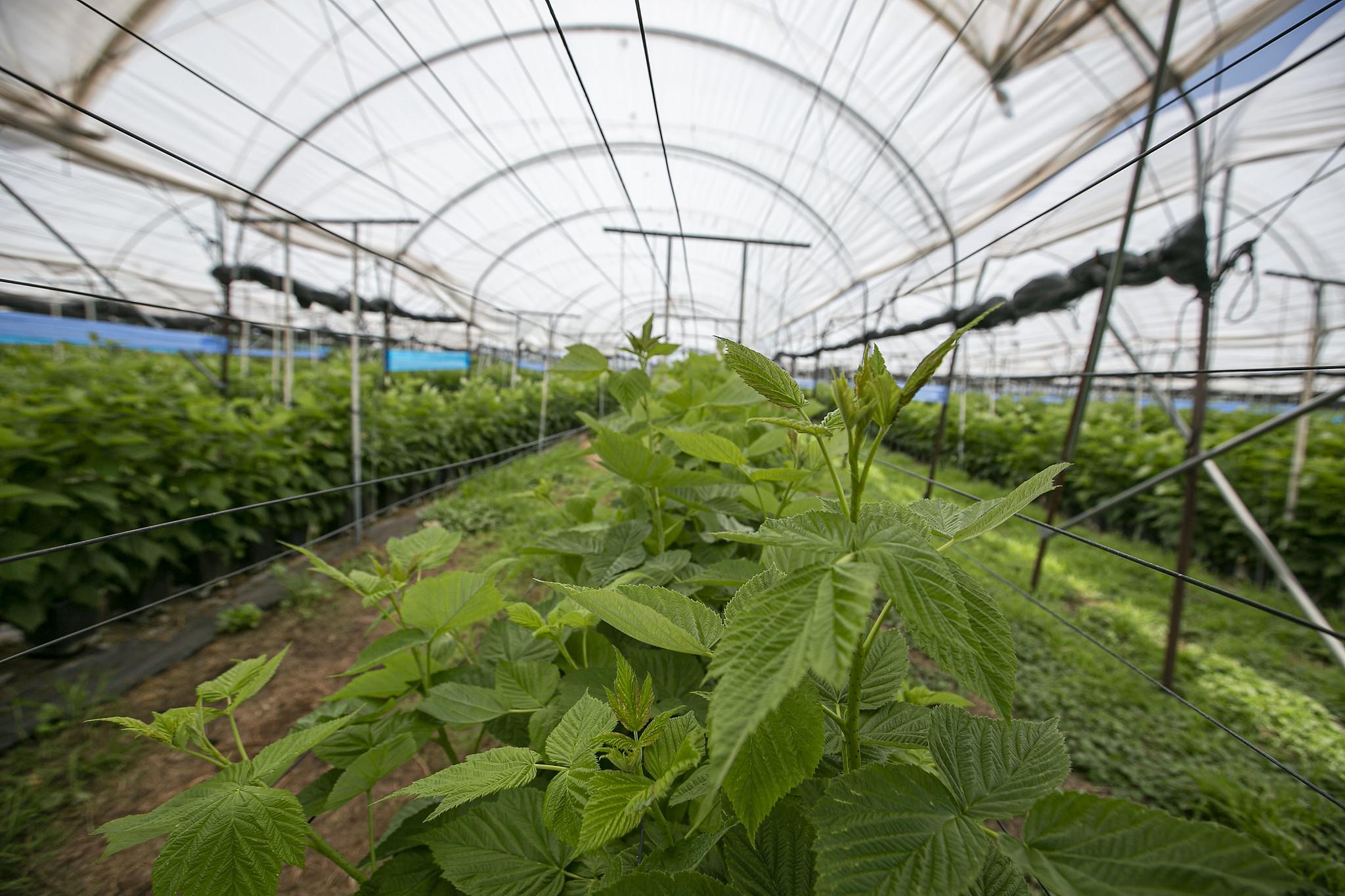 Jalisco impulsa prácticas sustentables en sectores productivos para seguridad alimentaria