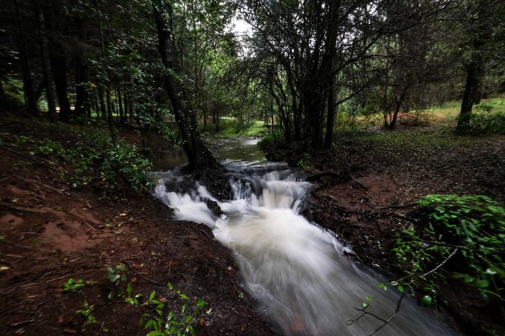 Conmemoran la protección de la naturaleza con avances en política pública
