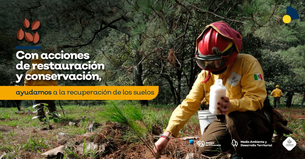 La reforestación: una alternativa para la recuperación del Bosque La Primavera