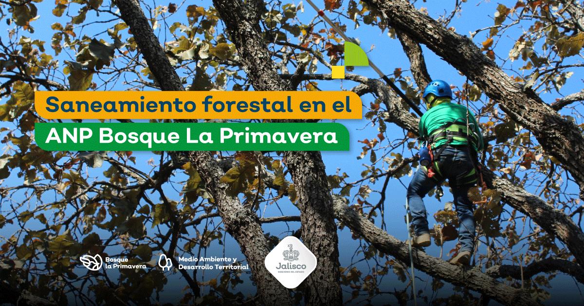 Realizan saneamiento forestal en el ANP Bosque La Primavera