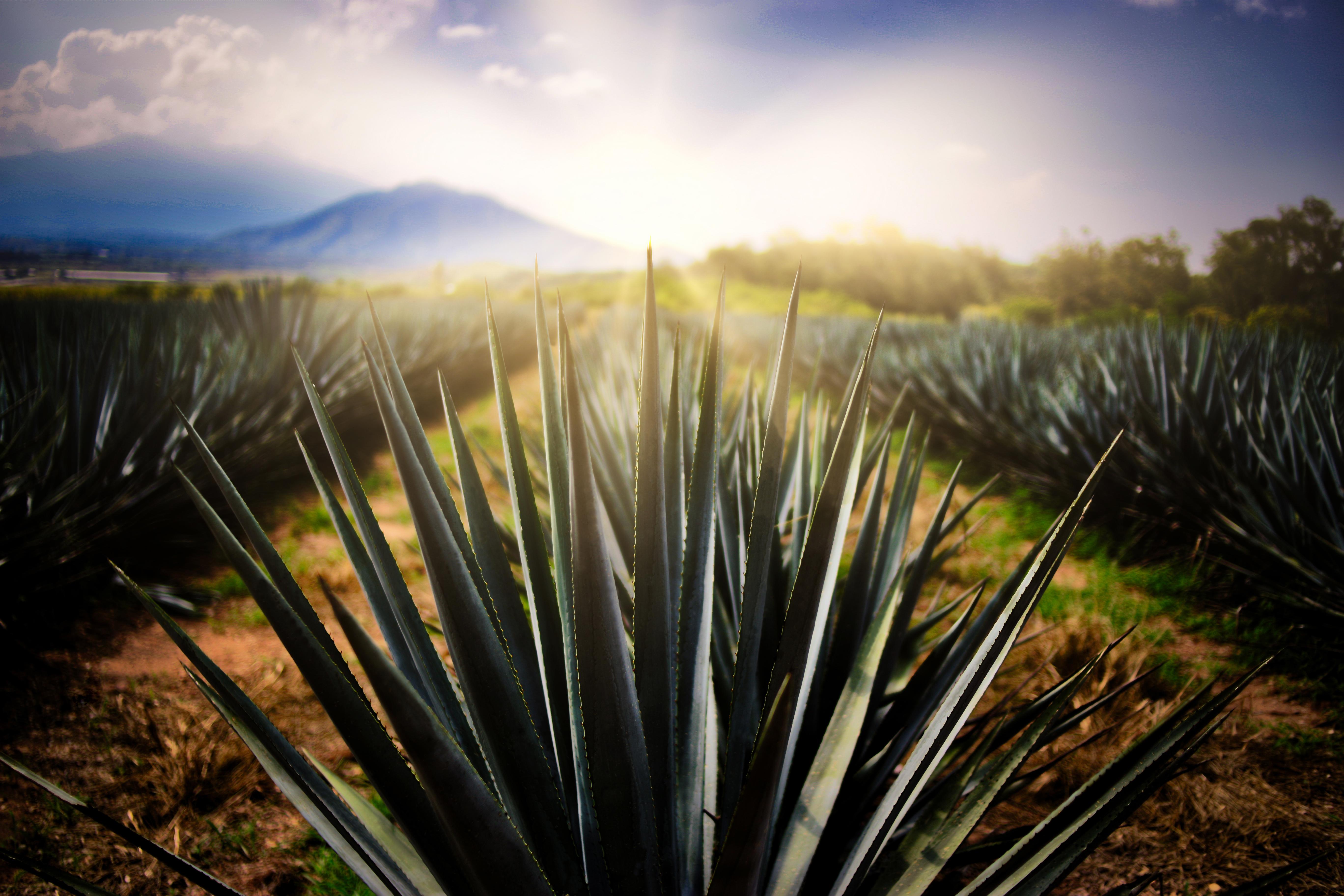 Tequila recibe certificación como primer Destino Turístico Inteligente de México y América Latina
