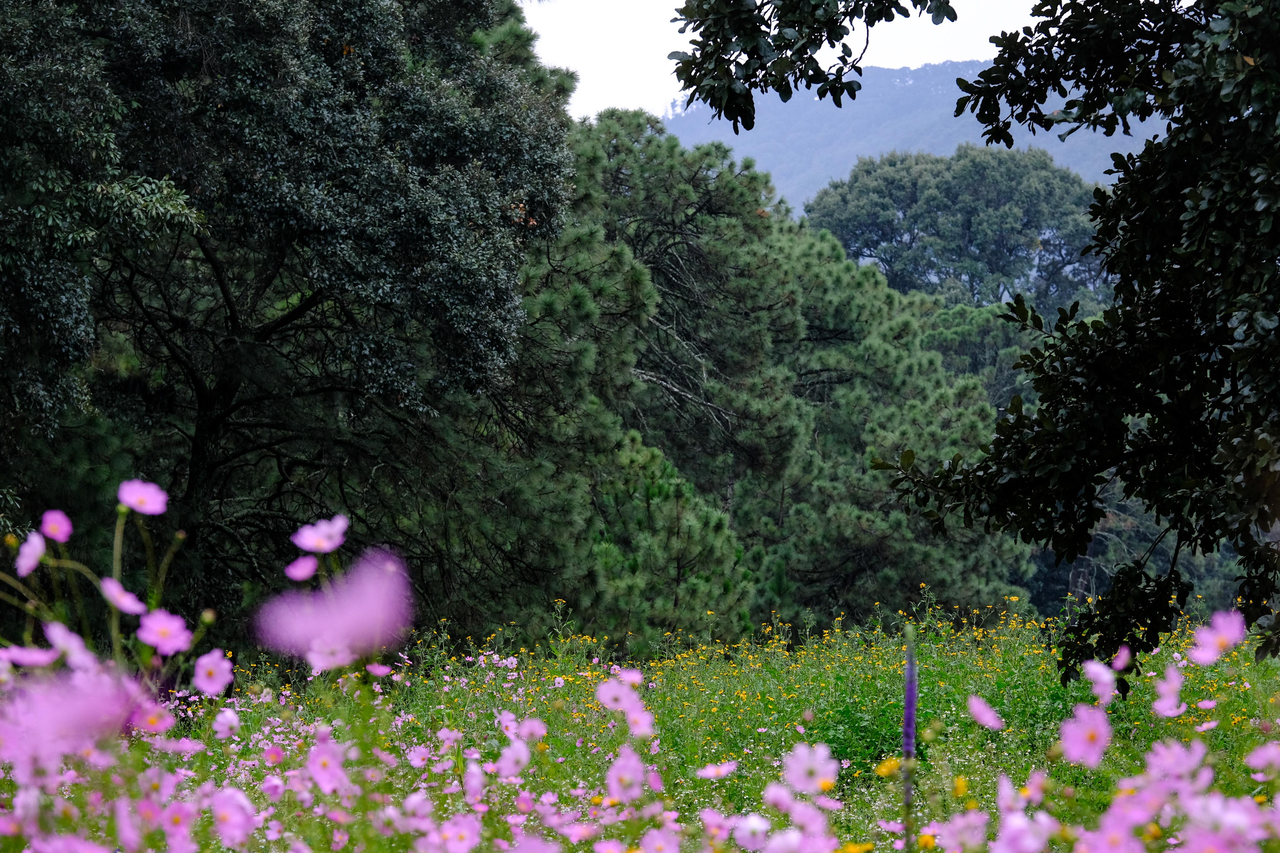 Firma convenio el OPD Bosque La Primavera con la Escuela Nacional de Estudios Superiores de la UNAM
