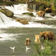 Parques Naturales de Alaska: Katmai y Denali