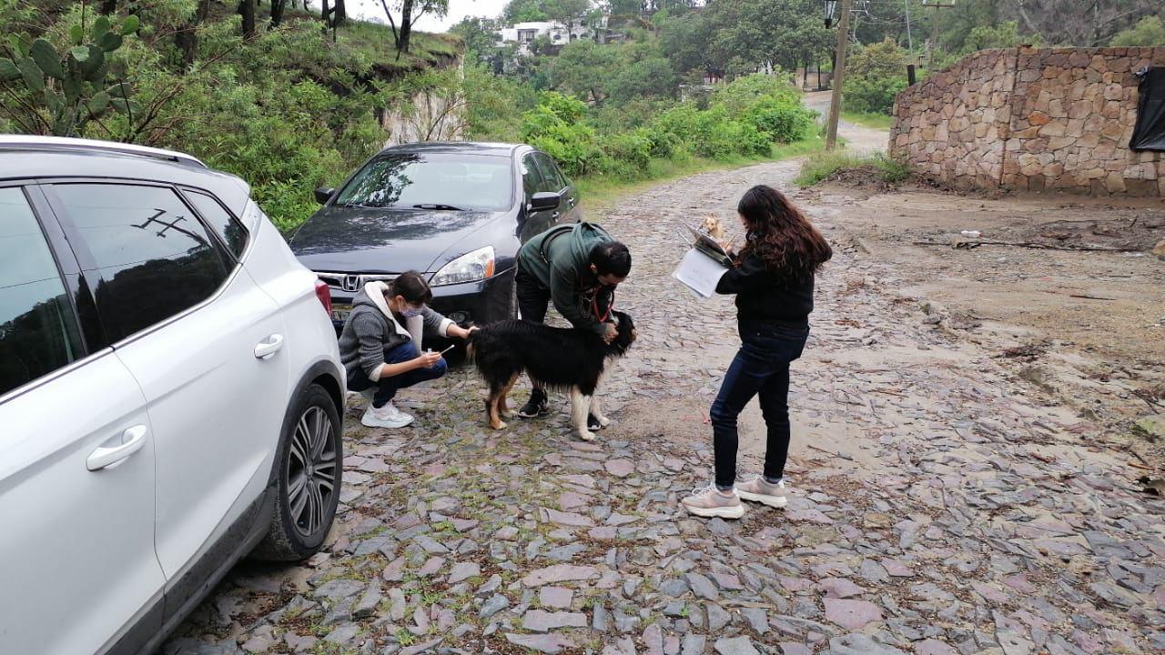 Colabora CCAIE con el Bosque La Primavera para concientizar sobre el riesgo de los perros ferales
