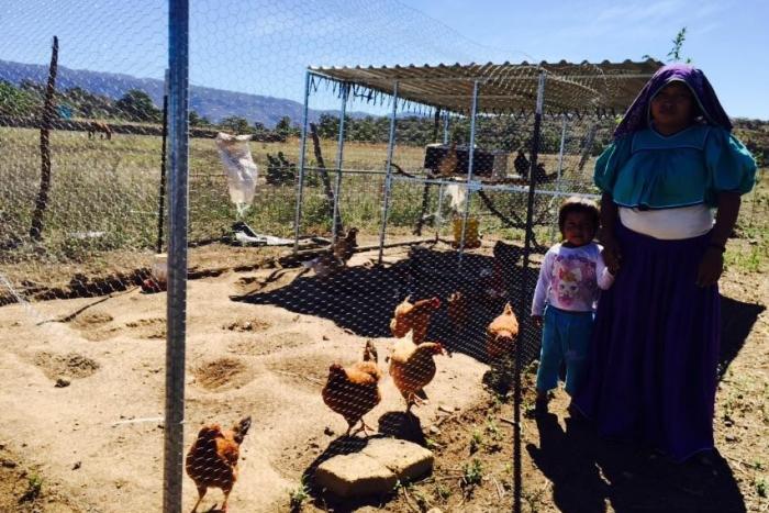 Imagen alusiva a la nota Se consolidan pequeños huertos y corrales en comunidades rurales