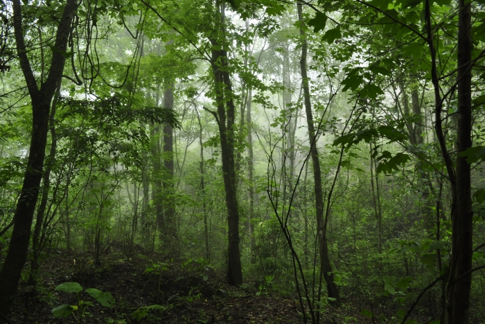 Bosque de Arce