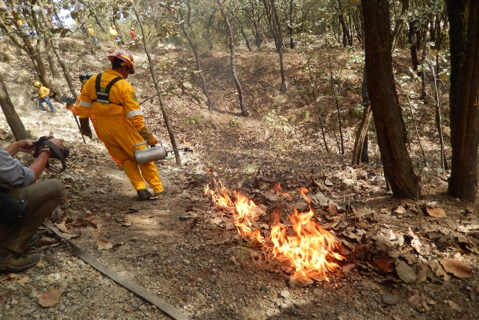 Imagen alusiva a la nota Capacita la SEMADET a brigadistas para combatir incendios forestales